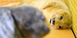 У полярному океанаріумі народилося тюленя – ФОТО