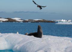 Антарктичне літо. Природа, якій не заважають люди.