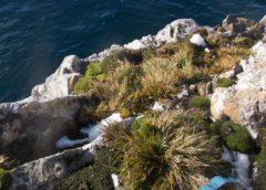 Рослинний світ та ґрунти району Аргентинських островів