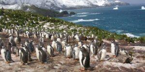 Пінгвіни користаються з розширення морської зони заборони рибальства
